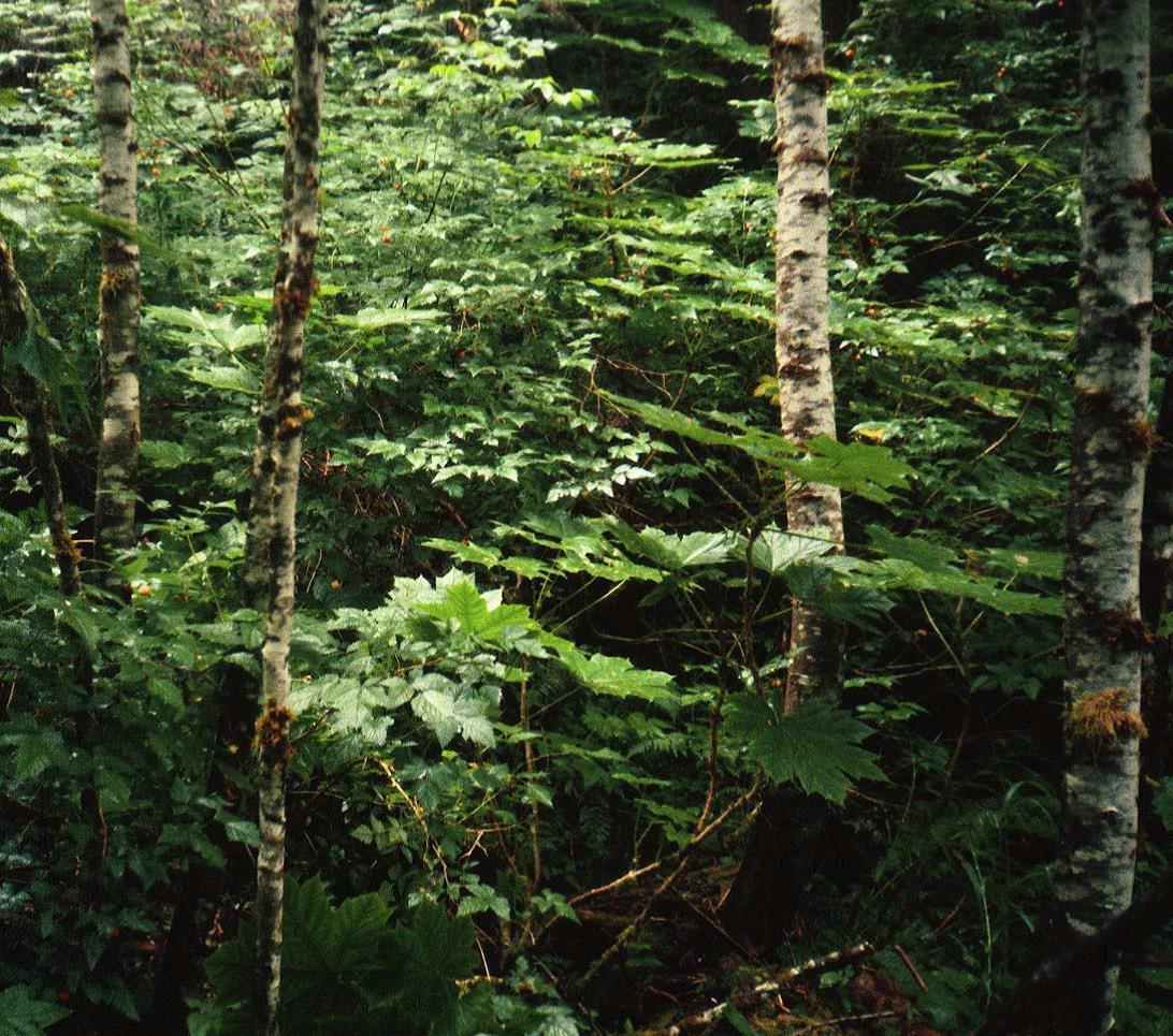 wetland type image
